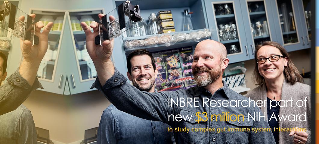 INBRE Researcher, Diane Bimczok, part of new $3 million NIH award to study gut immune system interactions.